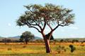 Kenya Needs Swahili Bibles